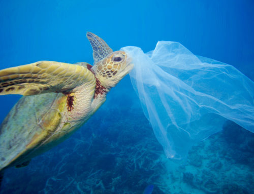 Medplastic, time to take action